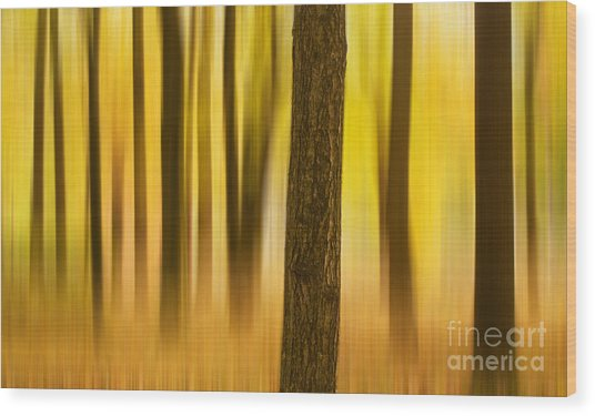 Trees In Autumn Forest Wood Print