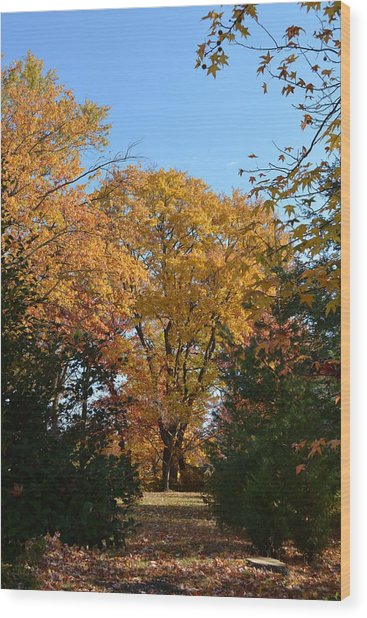 Trees In Fall Wood Print
