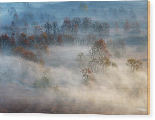 Trees In The Early Morning Fog Wood Print