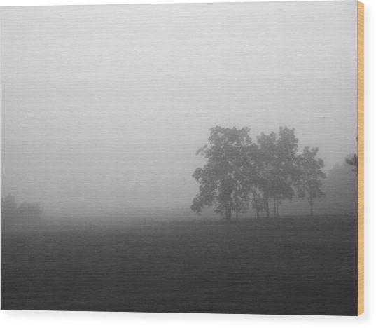 Trees In The Mist Wood Print
