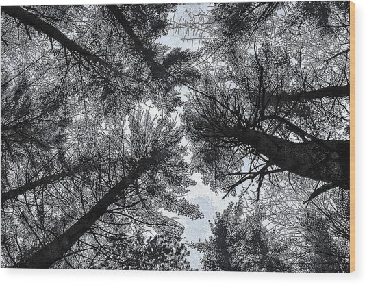 Trees In Winter Wood Print