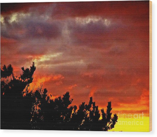 Trees Knowing The Sky Wood Print by Q's House of Art ArtandFinePhotography