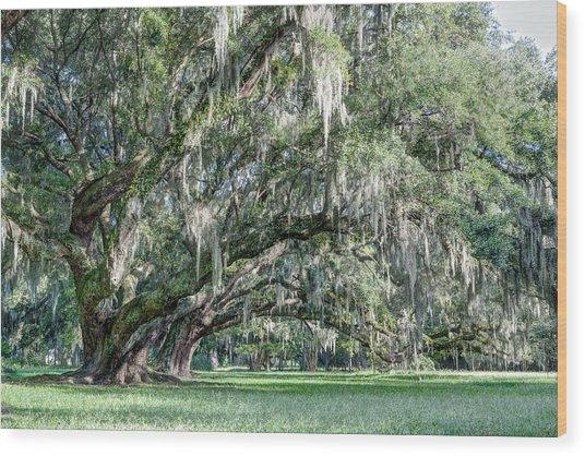 Trees Of Magnolia Wood Print