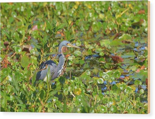 Tri Colored Heron 2 Wood Print