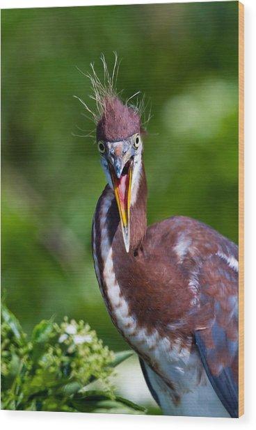 Tricolored Heron In Awe Wood Print