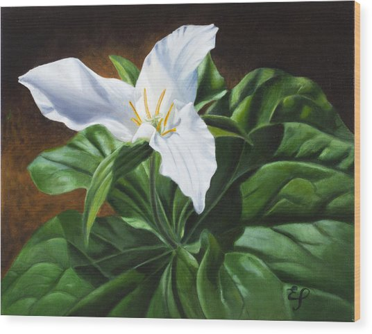 Trillium - Oil Painting On Canvas Wood Print