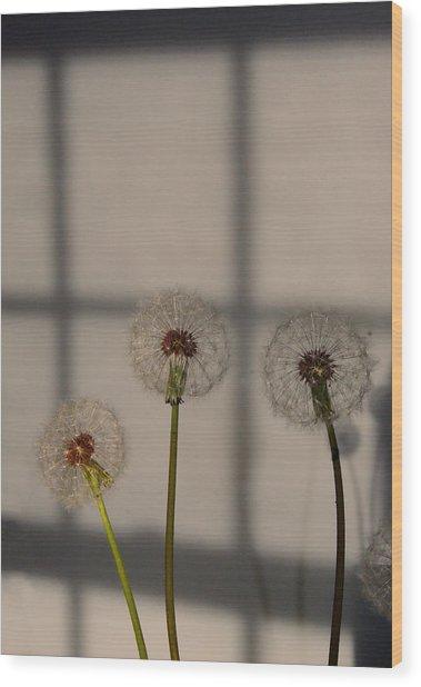 Trio Of Dandelions Wood Print