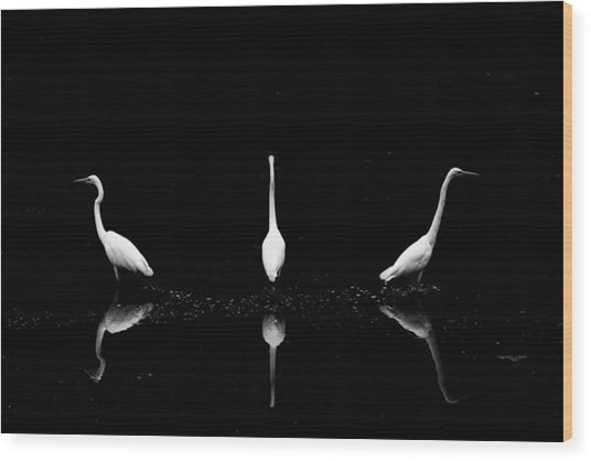 Trio Of Egret Wood Print by Yoshinori Matsui