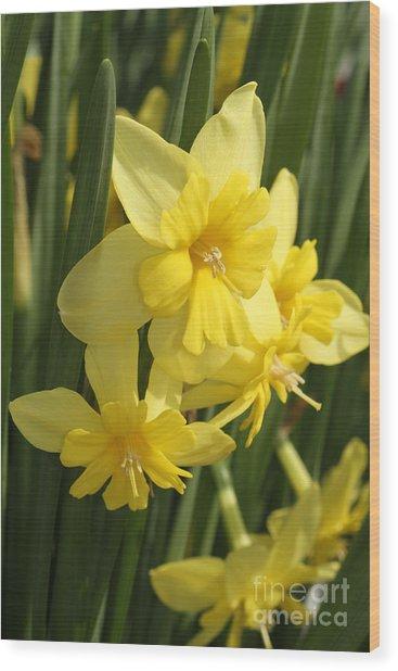 Tripartite Daffodil Wood Print