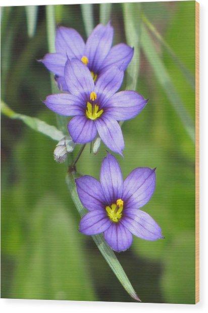 Triple Purple Wood Print