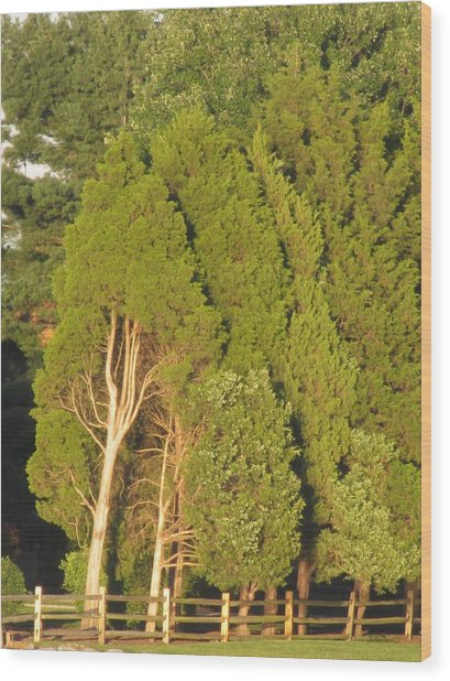 Triple Trees Wood Print by Debbie Nester