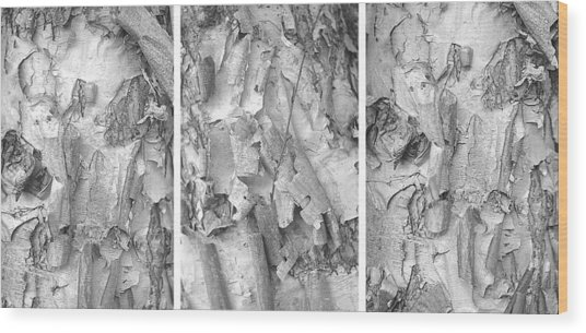 Triptych Of Curling Tree Bark In Black And White With A White Background Wood Print