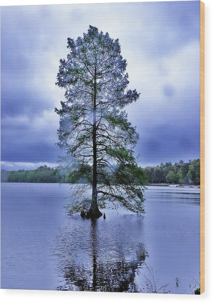 The Healing Tree - Trap Pond State Park Delaware Wood Print