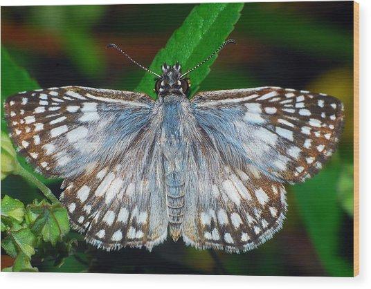 Tropical Checkered Skipper Wood Print