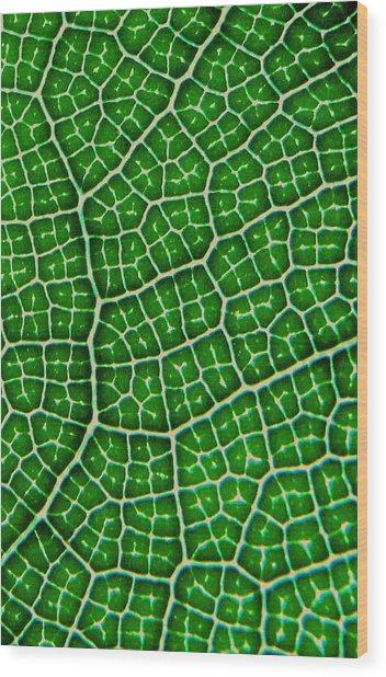 Tropical Fig Leaf Veins Wood Print