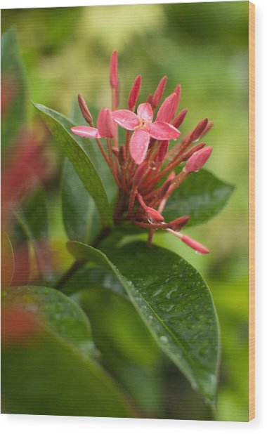 Tropical Flowers In Singapore Wood Print