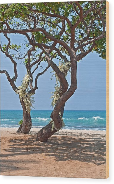 Tropical Heliotrope Trees With White Orchids On Beach Wood Print