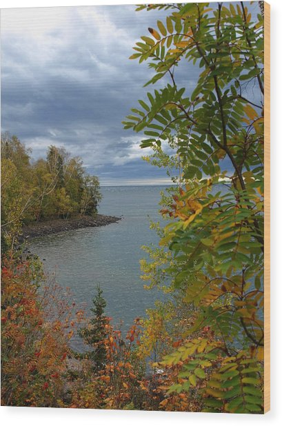 Tropical Mountain Ash Wood Print