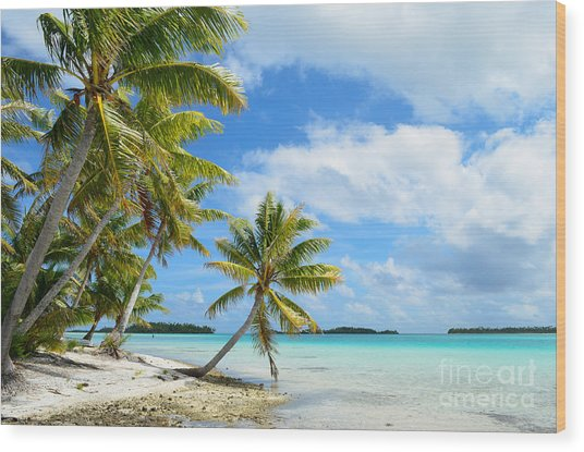 Tropical Beach With Hanging Palm Trees In The Pacific Wood Print