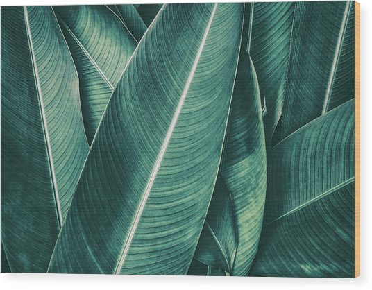 Tropical Palm Leaf, Dark Green Toned Wood Print by Pernsanitfoto