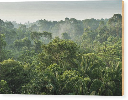 Tropical Rainforest Wood Print by Chanachai Panichpattanakij