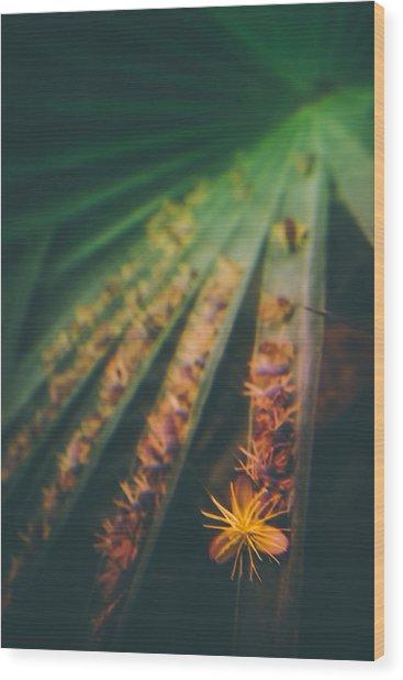 Tropical Ray  Wood Print