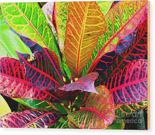 Tropicals Gone Wild Naturally Wood Print