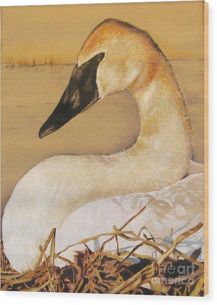 Sold Trumpeter Swan Wood Print
