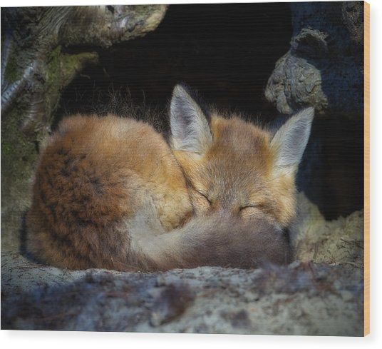 Fox Kit - Trust Wood Print