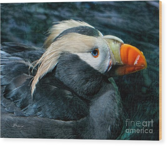 Tufted Puffin Profile Wood Print