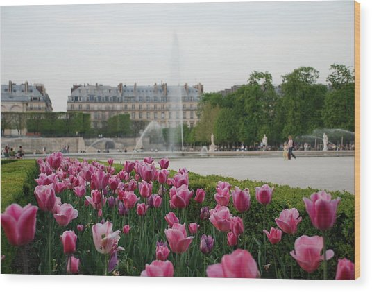 Wood Print featuring the photograph Tuileries Garden In Bloom by Jennifer Ancker