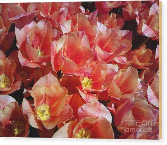 Tulip Festival - 39 Wood Print