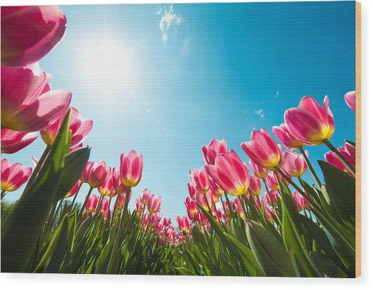 Tulip Field From Below Wood Print by Borchee