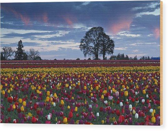 Tulip Field's Last Colors Wood Print