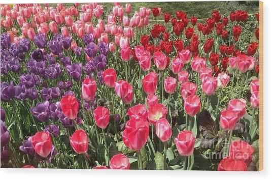 Tulip Garden 2 Wood Print