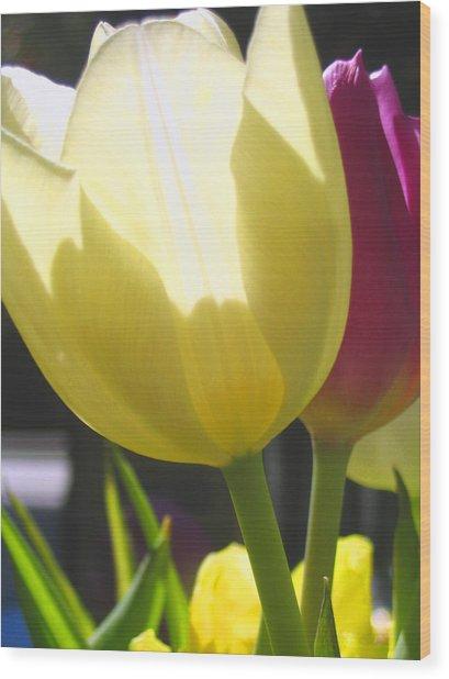 Tulip In Bright Sunlight Wood Print