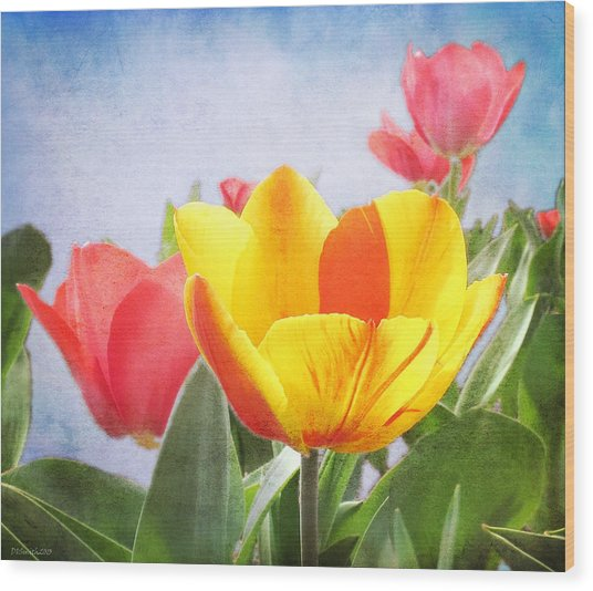 Tulip Joy Wood Print