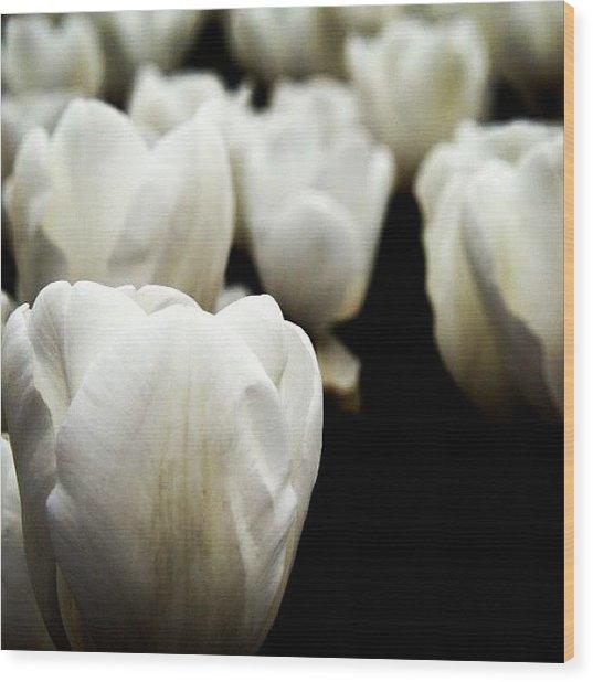 #tulip #lale #çiçek Wood Print