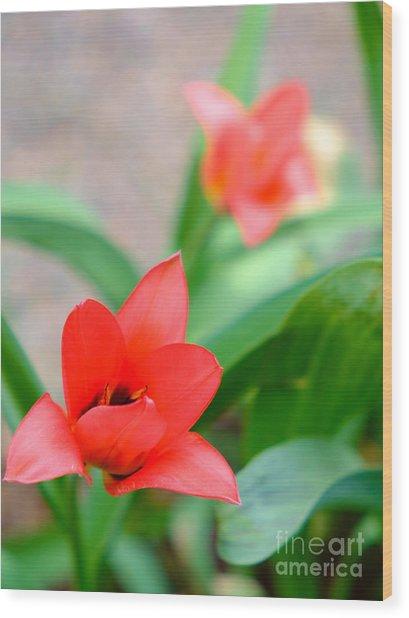 Tulip Of Dream Wood Print