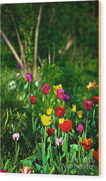 Tulip Rainbow Wood Print
