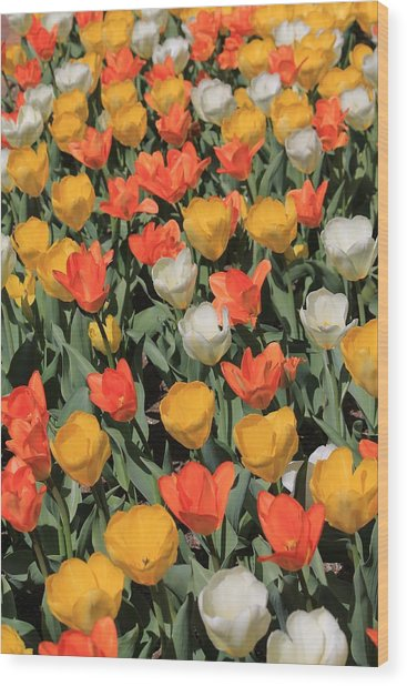 Tulip Stretch Wood Print