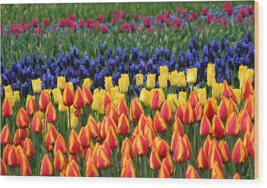 Tulip Time In Amsterdam Wood Print