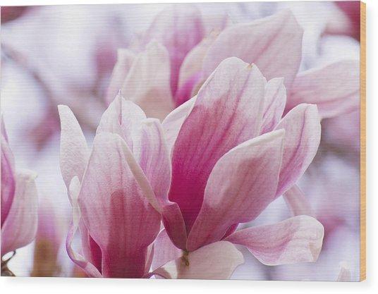 Tulip Tree Blooms Wood Print