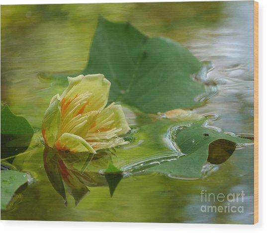 Tulip Tree Flower Wood Print