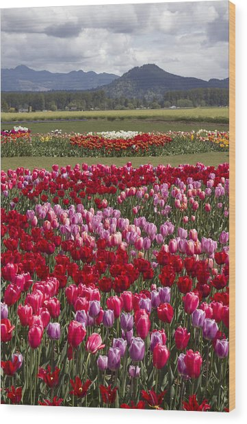 Tulip Vista Wood Print
