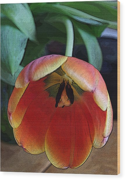 Tulip3 Wood Print by Valerie Timmons