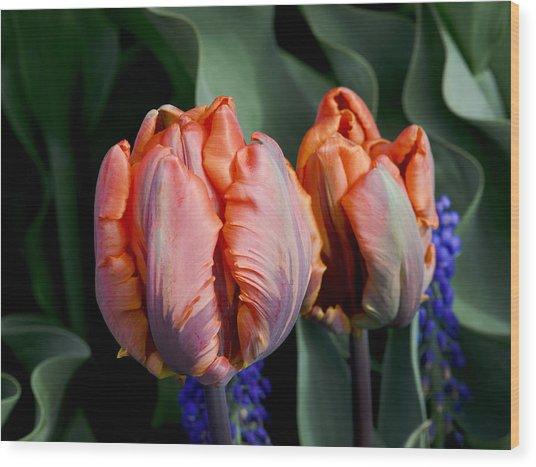 Irene Parrot Tulips Wood Print