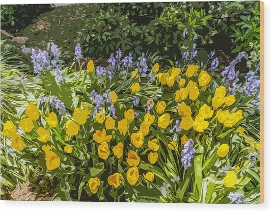 Tulips And Bluebells Wood Print by Gary Cowling