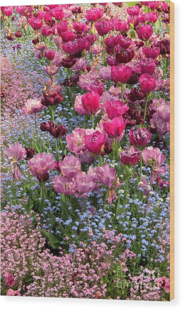 Tulips And Forget-me-nots Wood Print by Frank Townsley