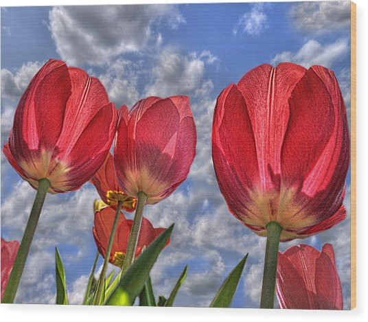 Tulips Are Better Than One Wood Print